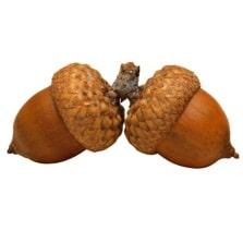 Описание: Картинки по запросу картинки орехов для белки