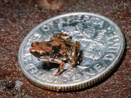 Описание: Картинки по запросу картинки самой маленькой лягушки