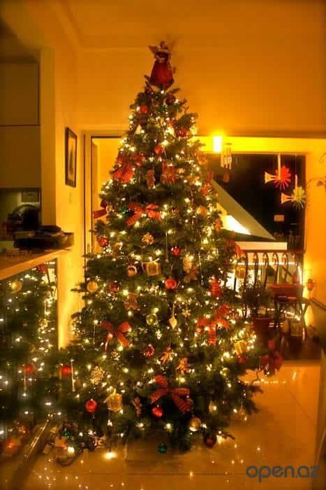 1387028348_1386951338_tree2010