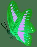 Папка-передвижка «Расскажите о редких растениях нашего района» с оформлением «Полочка редких растений»