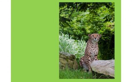 Шаблон презентации «В мире животных»