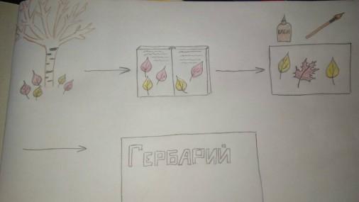 Учителю дефектологу: Познавательно-творческий проект для воспитанника с ОВЗ « Мой гербарий».
