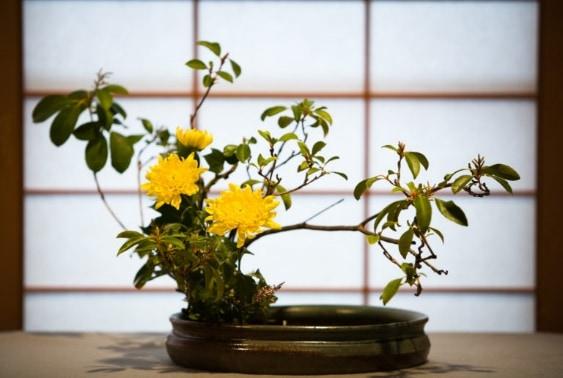 Ohara-Ikebana-2008-02-02-RS725_ikebana1-02-768x516