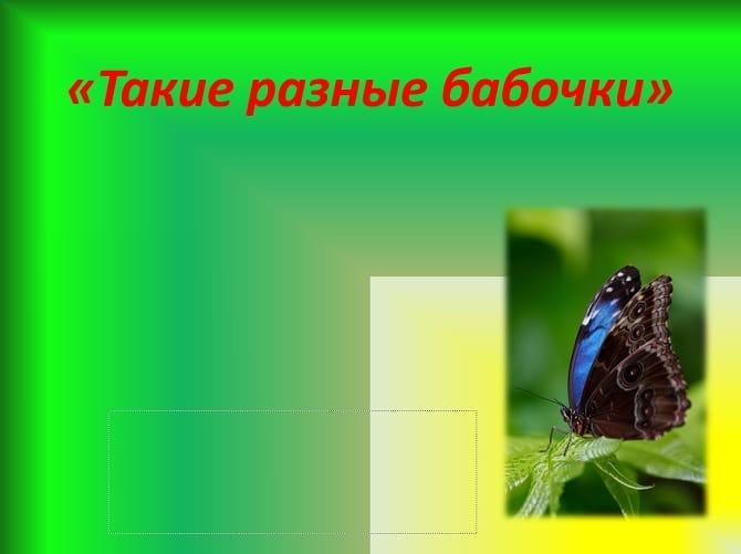 Шаблон презентации «Такие разные бабочки»